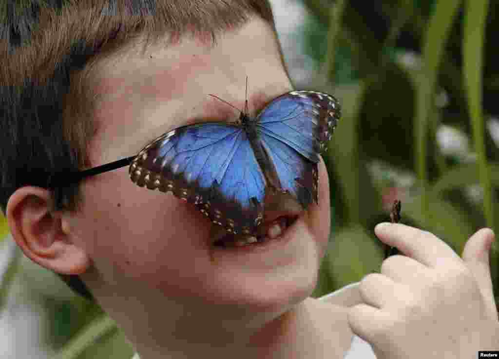 Harry Brown, sedmogodišnjak, sa leptirom na licu u Muzeju istorije prirode u Londonu.