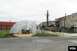 Nông trại trong thành phố ở Baltimore