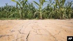 Lượng mưa ít và nhiệt độ cao làm 61% diện tích đất của Hoa Kỳ chịu hạn hán từ cấp độ nhẹ cho đến nghiêm trọng trong năm nay