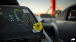 Artificial flower adorns junk car at Aadlen Brothers Auto Wrecking, also known as U Pick Parts, Sun Valley section of Los Angeles, Nov. 11, 2015.