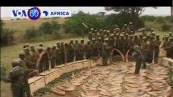 VOA60 Africa - October 30, 2013