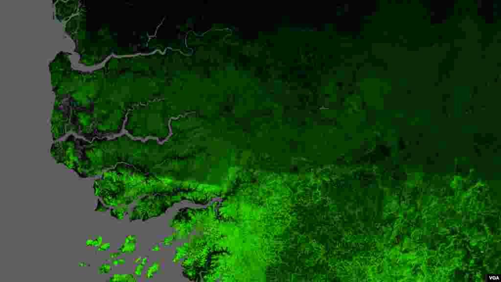 Image satellite de la forêt de Casamance en 2010 avec en vert la surface forestière (Université de Maryland USA)