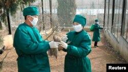 북한 보건 관계자들이 지난 2008년 평양 동물원에서 조류독감 방역 활동을 하고 있다. (자료사진)