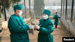 북한 보건 관계자들이 평양 동물원에서 조류독감 방역 활동을 하고 있다. (자료사진)