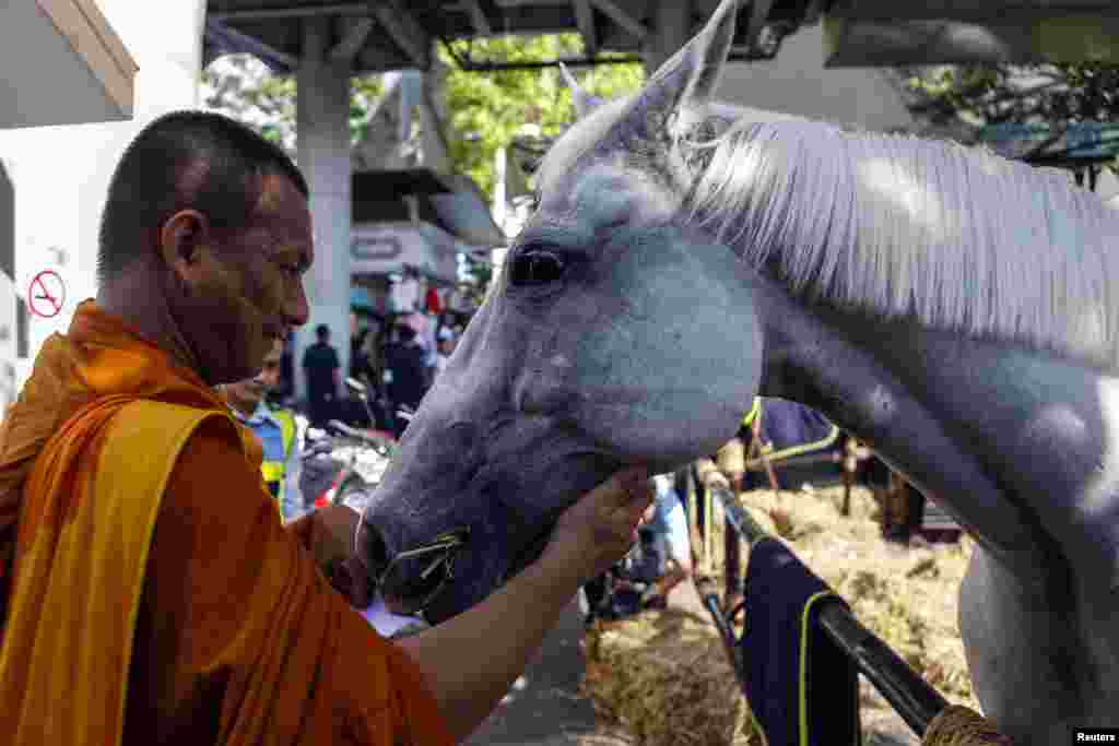 A Buddhist monk feeds a horse at the Victory Monument during a military event in Bangkok, June 4, 2014.