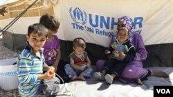 شام کے پناہ گزین