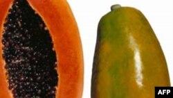 99 người lâm bệnh tại Mỹ vì ăn đu đủ