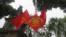 """Ở Việt Nam thì ngay cả Tết cổ truyền cũng bị """"chính trị hoá"""", và Hà Nội cũng không phải là ngoại lệ."""