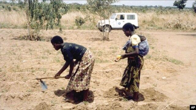 Women working in the fields in Malawi.