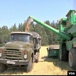 Zbog velike suše, ove godine bi izvoz žitarica iz Rusije mogao biti prepolovljen