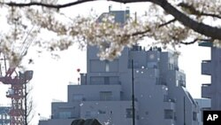 Patriot Advanced Capability-3 (PAC-3) land-to-air missiles are seen under cherry blossoms at the Defence Ministry in Tokyo, April 12, 2012.