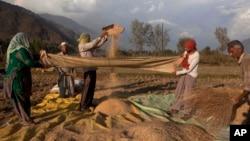 Para petani memproses biji-bijian setelah dipanen di desa Boras, sekitar 40 kilometer sebelah timur Srinagar, India. (Foto: Dok)