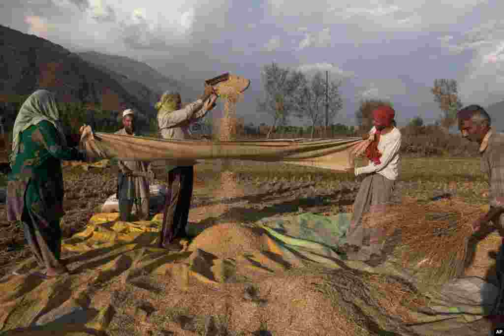 Kashmiri farmers separate grain from the chaff after harvest in Boras village, about 40 kilometers (25 miles) northeast of Srinagar, India.