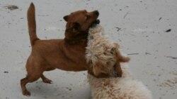 طرح گروهی از نمایندگان مجلس: ممنوعیت نگهداری حیوانات خانگی
