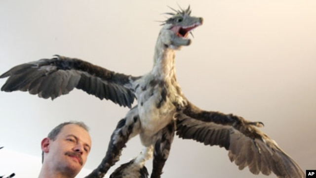 Brazilian paleontologist Alexander Kellner shows a replica of Microraptor during the second Latin American Congress of Vertebrate Paleontology, in Rio de Janeiro, Brazil, August 2005. (file photo)