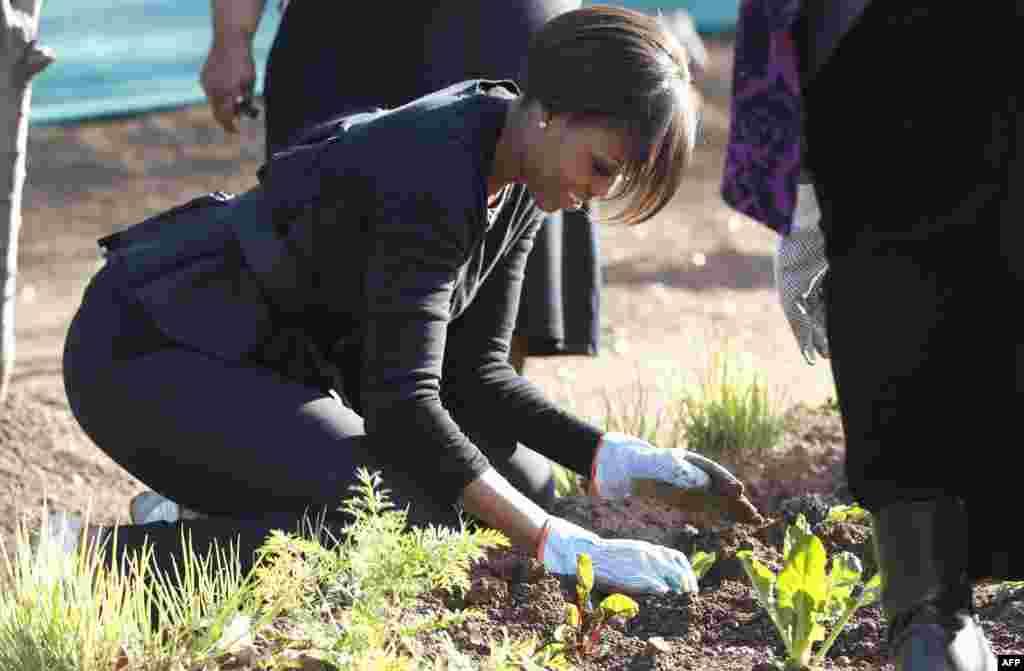 Мишель Обама сажает шпинат в саду в Соуэто, Йоханнесбург. 22 июня 2011г.