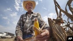 En las últimas siete semanas, el precio del maíz se ha elevado más de 60 por ciento por la sequía.