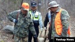 지난 15일 강원 삼척시 가곡면 탕곡리의 한 야산에서 마을 주민을 습격해 2명 중 1명을 숨지게 한 '살인 멧돼지'로 추정되는 멧돼지 1마리가 16일 사살됐다.