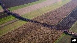 Kolona migranata u Sloveniji, 25. oktobar 2015.