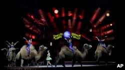 "Ringling Bros. and Barnum & Bailey performers ride camels during a performance, Jan. 14, 2017, in Orlando, Fla. The Ringling Bros. and Barnum & Bailey Circus will end the ""The Greatest Show on Earth"" in May after 146 years."