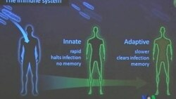 2011-10-03 粵語新聞: 2011年諾貝爾醫學獎揭曉