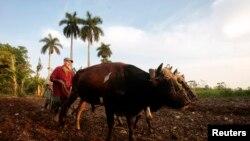 Los productos agrícolas cubanos no están considerados para entrar al mercado estadounidense.