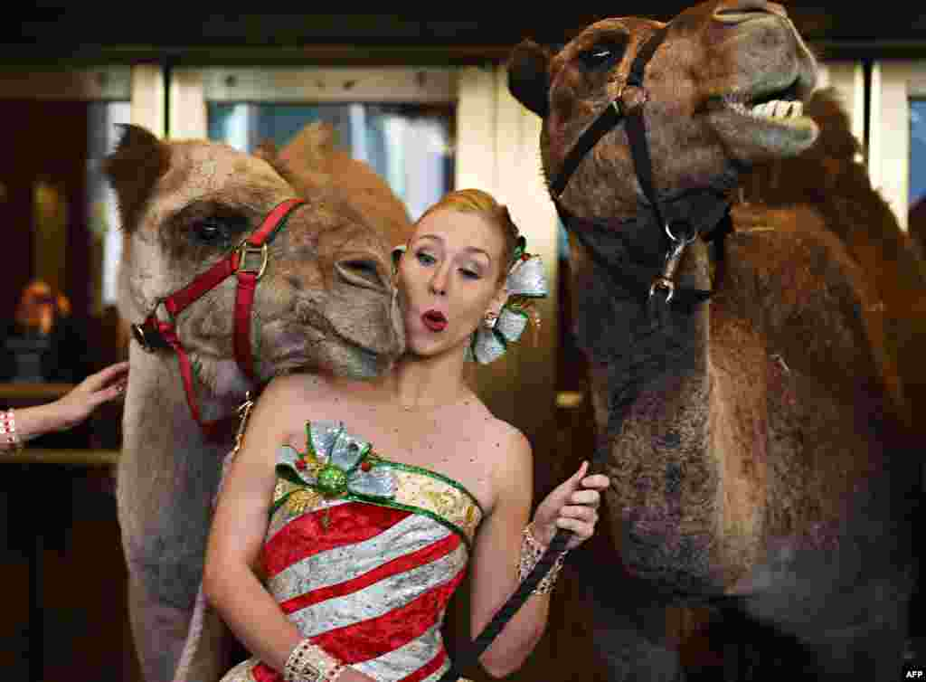 Radio City Rockette Lauren Renck is nudged by a camel right before Cardinal Timothy Dolan, Archbishop of New York, blesses the animals in the Radio City Christmas Spectacular in New York.