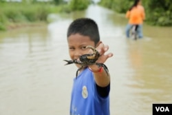 A boy and his crab just grabbed from a flooded road in Spean Tmor commune, Dangkoa district, Phnom Penh, Cambodia, on Oct. 14, 2020. (Malis Tum/VOA Khmer)