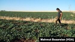 17 Haziran 2021 - Suriye'deki iç savaştan kaçarak Türkiye'ye yerleşen çiftçi Heysam Ali
