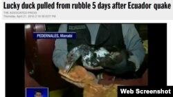 وقتی اردک در دستهای ماموران امداد و نجات شروع به بال زدن کرد، پس از چند روز لبخند را بر روی لبهای آنها نشاند.