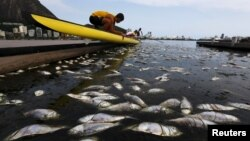 Dead fish are pictured next to a rowing athlete as he puts his boat in the water before a training session at the Rodrigo de Freitas lagoon, in Rio de Janeiro, April 13, 2015.