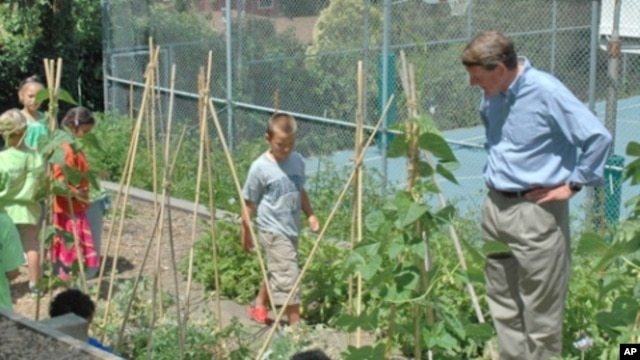 Head-Royce students grow organic vegetables as well as native plants and trees in the school's 370-square-meter garden.