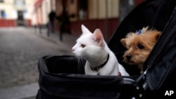A cat and a dog sit inside a baby stroller in Seville, Spain, Saturday, June 19, 2021. (AP Photo/Thanassis Stavrakis)