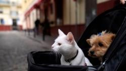 Quiz - What Happens to Pets When Couples Break Up