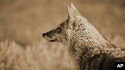 Како да се заштитат ретките животински видови на Балканот