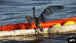 Ekološka katastrofa u Meksičkom zalivu izazvana izlivanjem nafte