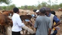 Ouagadougou bagan feere kene