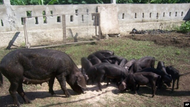 Concrete blocks transformed into livestock pens on the organic farm in Haiti that Boston physician Arielle Adrien helps support.
