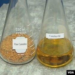 Iz sjemena cameline, poznate kao divlji lan, dobije se ulje koje pokreće nadzvučni avion