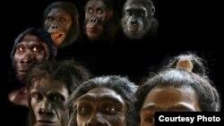Rekonstrukcija paleo-umetnika Džona Grčija pokriva više od šest miliona godina evolucije čoveka.