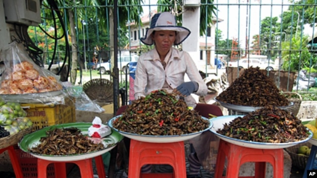 Selling insects as snacks in Cambodia