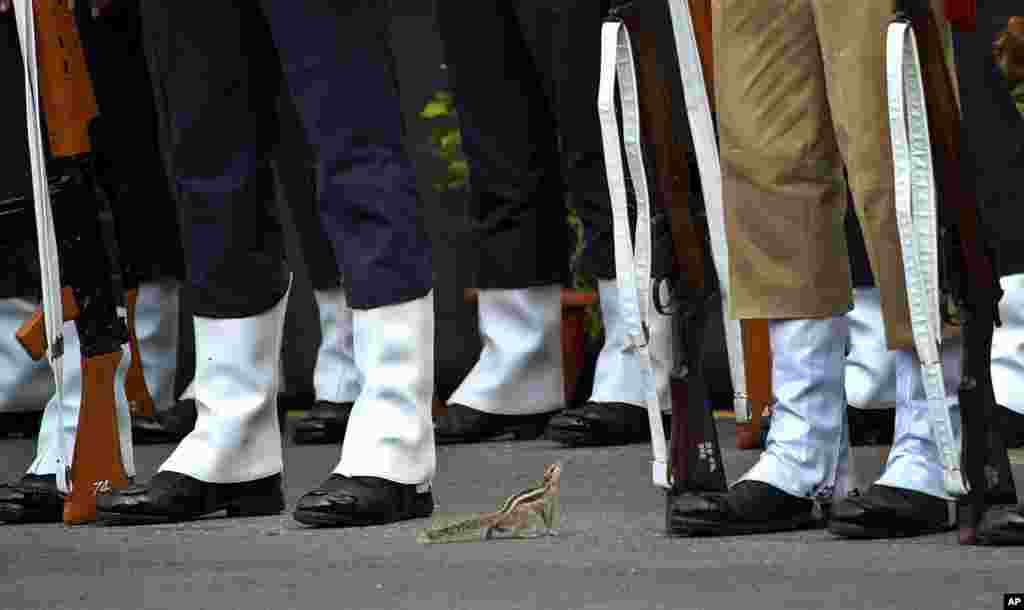 A squirrel approaches Indian soldiers who are rehearsing for the Independence Day celebrations in New Delhi, India.