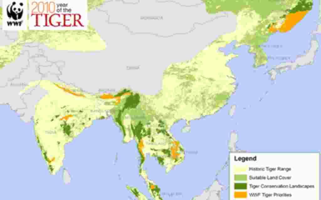 La población de tigres salvajes ha disminuido un 95% desde 1900, y su variedad de especies ha caído en un 93%.