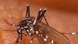 Malaria mata 15.000 pessoas em angola em alguns meses - 2:22
