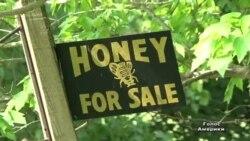 Бджоли заробляють для США 15 млрд на рік