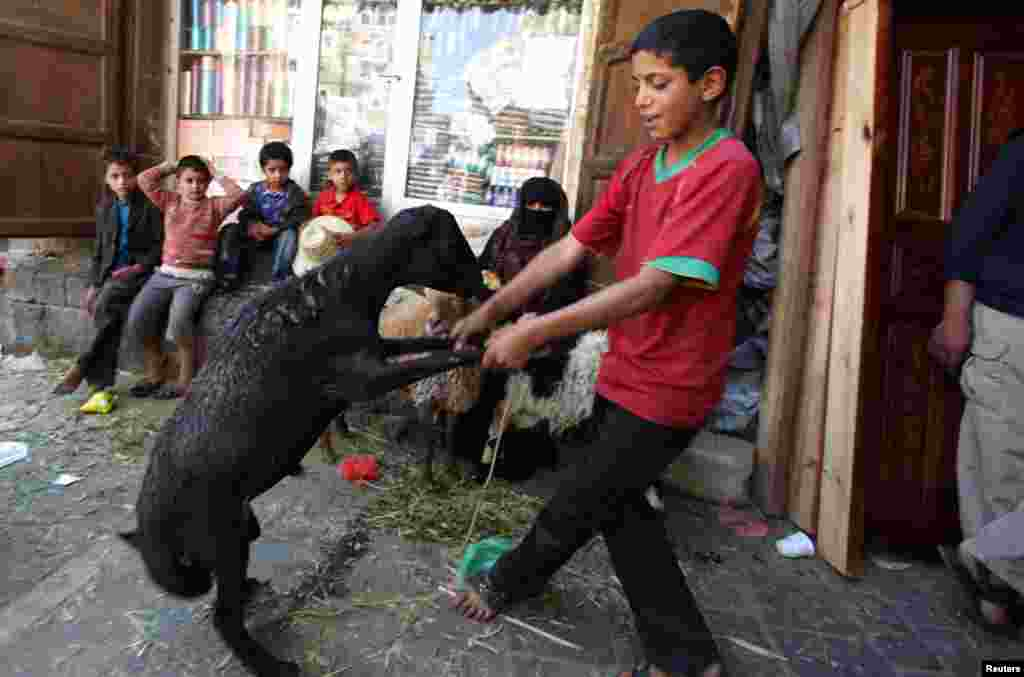 A boy dances with a sheep at a livestock market ahead of Eid al-Adha festival in Sanaa, October 24, 2012.