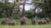 Environmentalists: Kenyan Avocado Farm Would Block Elephant Movements