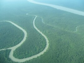 A mangrove landscape on the Ganges River Delta, Bangladesh. Mangroves are being rapidly deforested globally.