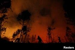 Petugas pemadam kebakaran berupaya memadamkan api yang membakar hutan di kawasan Hutan Nasional Sebangau, Palangka Raya, Kalimantan Tengah, 14 September 2019.