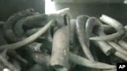 Pembe za ndovu